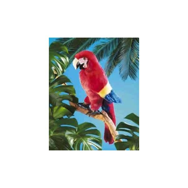 Pupazzo  pappagallo arabo